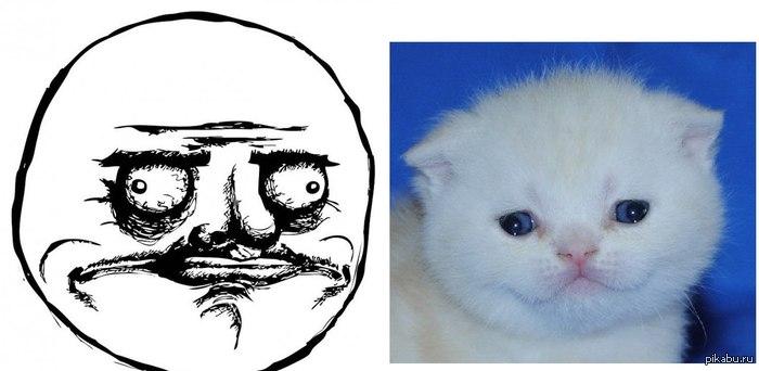 Кот Me Gusta Вот такой котенок у меня, ну похож же :3