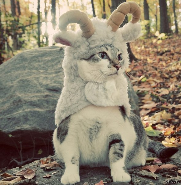 Кот довакина