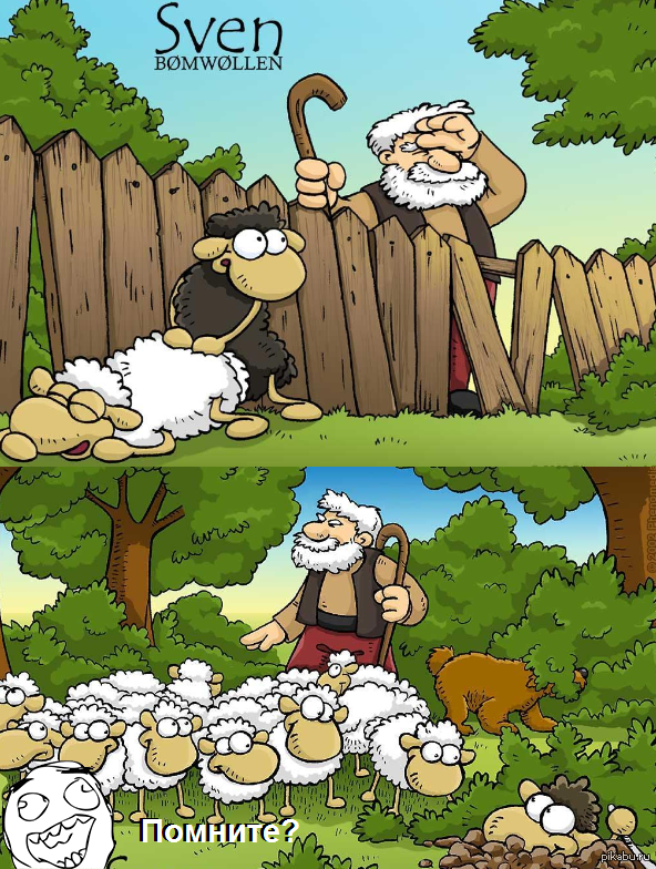 Баран трахает овечек