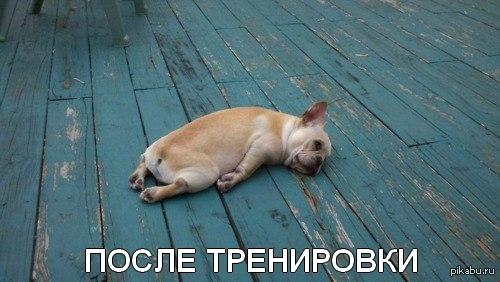 sleepy animals meme - 928×523