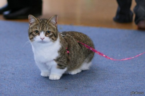 pet mate cat flap problems