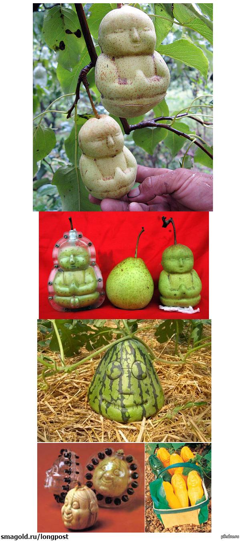 Фигурные фрукты и овощи Пожалуй попробую в этом году сделать яблоко в форме сами знаете чего =)