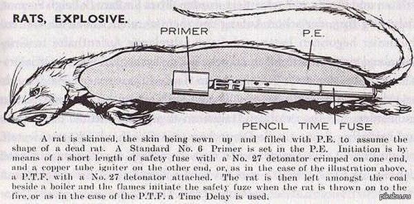 7c5b23f511f7 Секретное оружие Великобритании времён Второй мировой войны: мина,  замаскированная под дохлую крысу!