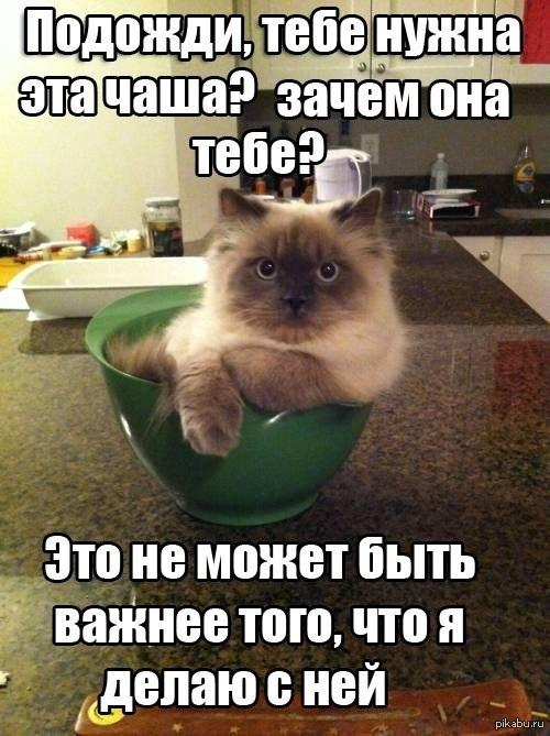 Ох уж эти коты И не откажешь же
