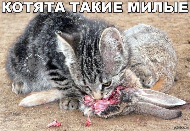 cat behavior biting attacking