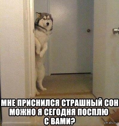 Собака кошмаров бояка