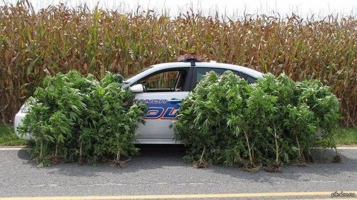 Конопля и машина штаты сша в которых легализована марихуана