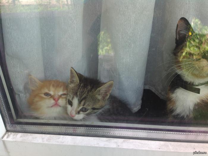 котятки Фоткал с улицы, так понравилась фотка, что поставил на рабочий стол, может кому тоже пригодится