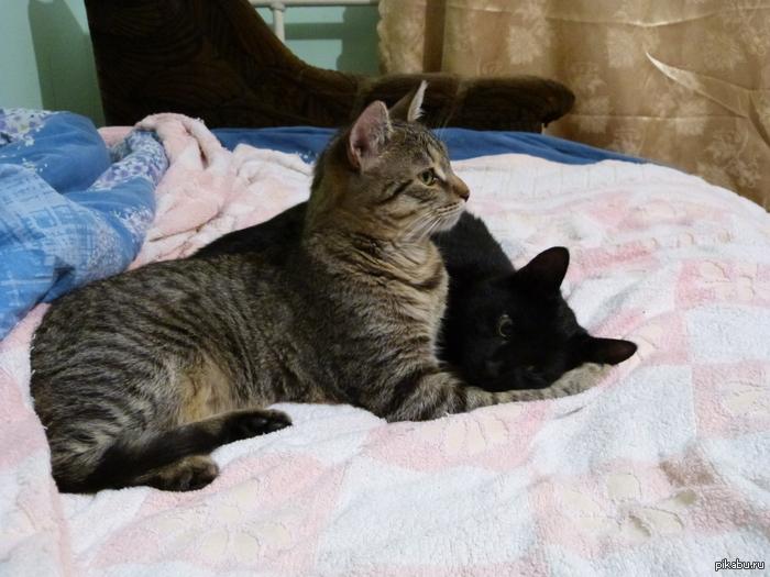 Кошатники, у кого есть свободные и добрые руки? Привет всем!   Нужно приютить двух красивых и ласковых котов. Поднимите, пожалуйста, в топ. Фотографии, подробности и коммент для минусов внутри.