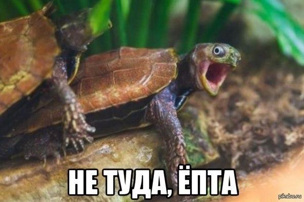 Секс с черепахой