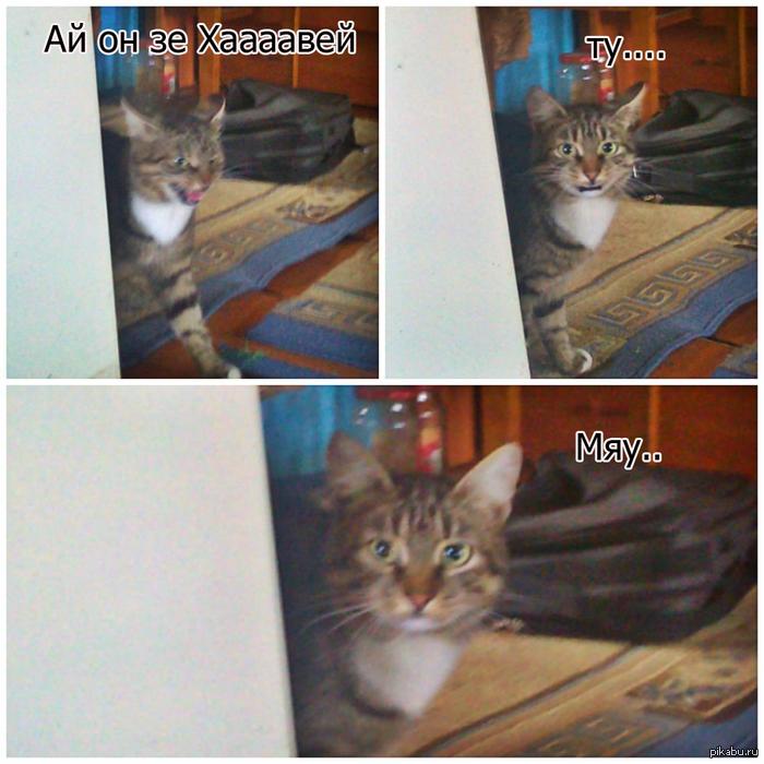 Мой кот любит мою музыку :3