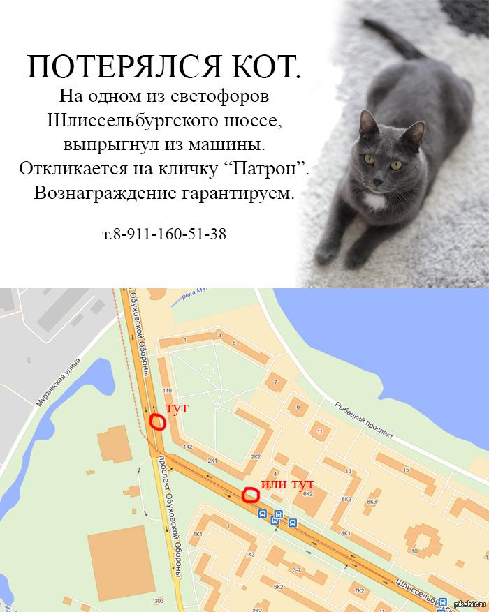 Пикабушники из Санкт-Петербурга (Рыбацкое) помогите, пожалуйста, пропал котейка любимый!