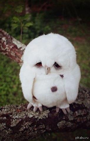 Грустная сова Печаль выглядит именно так