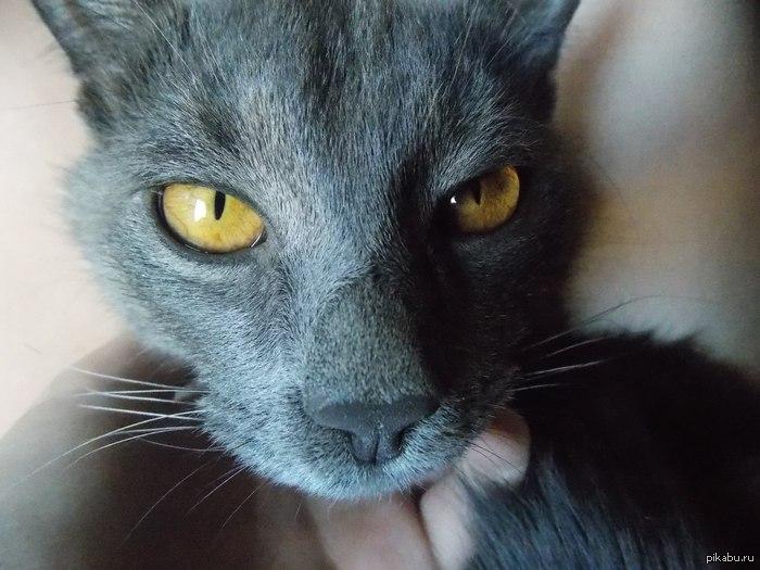 Мне просто нравятся глаза моего кота :3