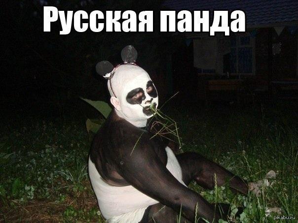 панды няшные картинки