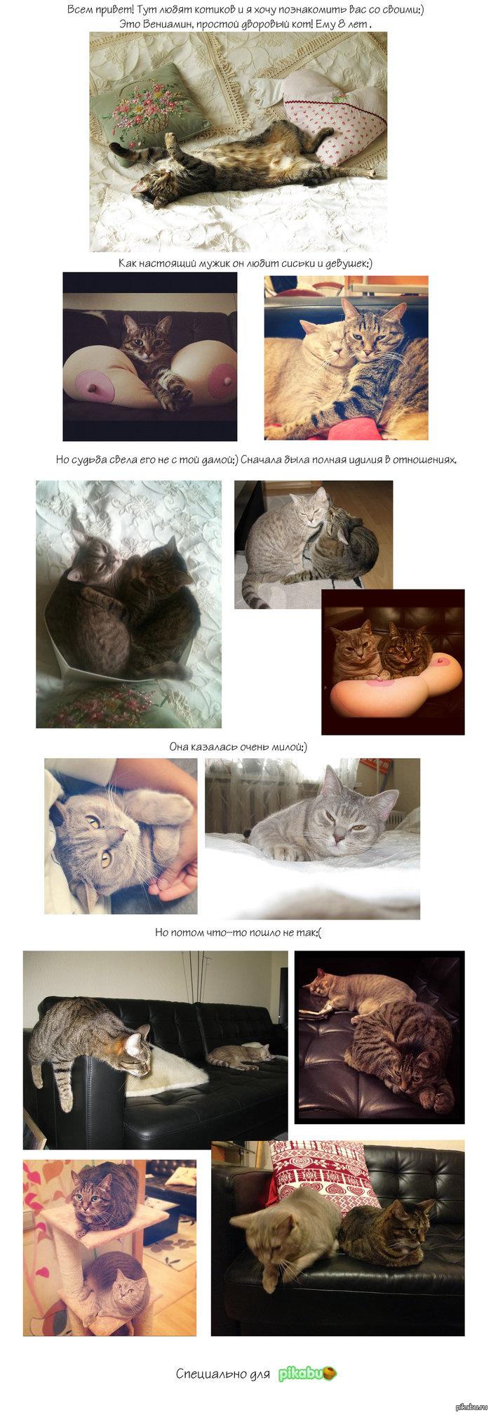 История моего котика:) (Длиннопост) тут любят котиков и я хочу познакомить вас с моими:)