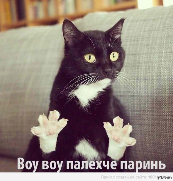 Хач и кот