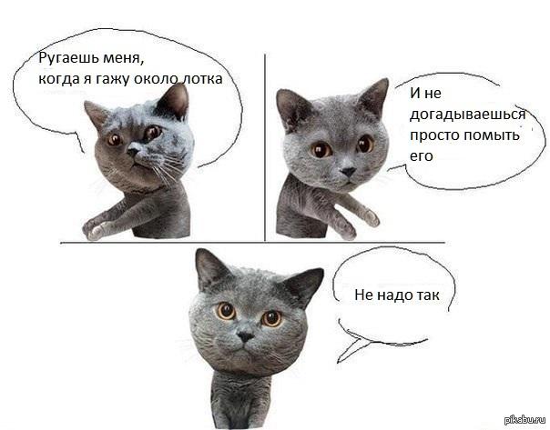 Кот даёт совет, дельный совет...
