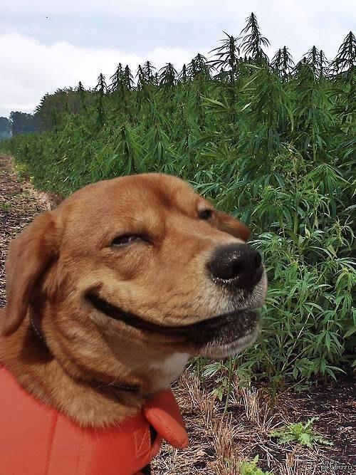 """Собака, по очевидным причинам - """"Улыбака"""". Прямо в душу смотрит.)"""