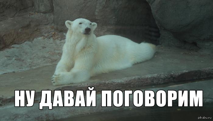 Медведь в забавной позе Московский зоопарк 6.07.13