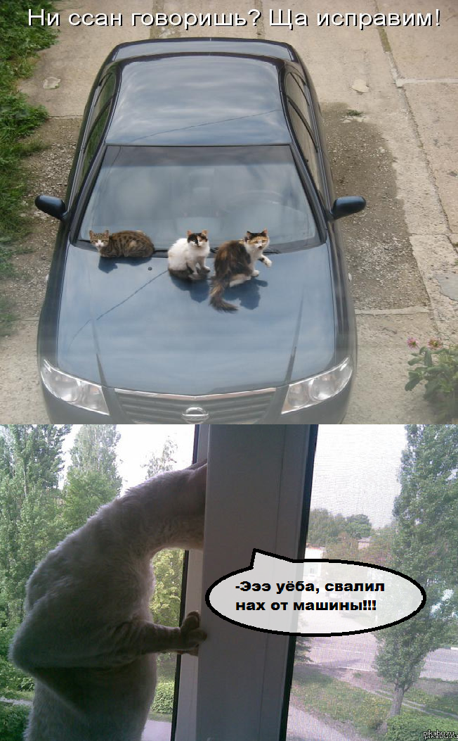 Meanwhile in the universe cats осторожно мат:х