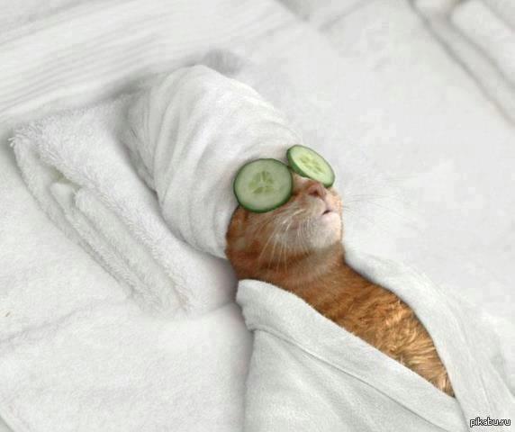 Фото кот на отдыхе