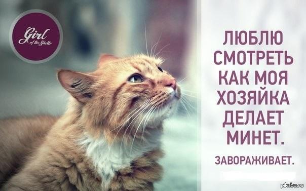 Картинки котов и цитаты