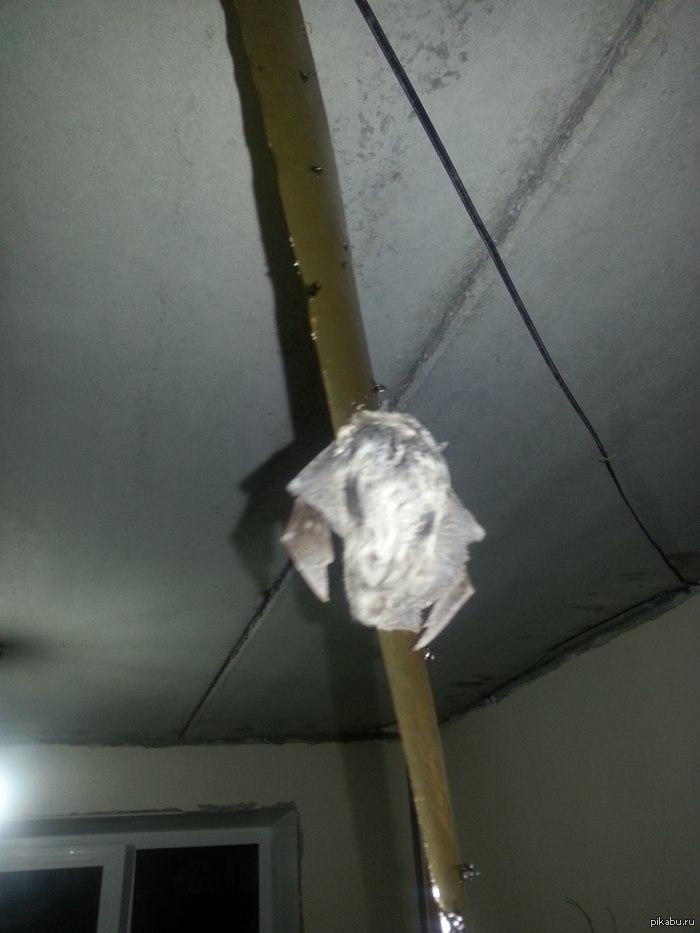 """вот такую """"муху"""" мы поймали на липучку сидел в комнате, услышал странный шум на кухне, зашел и увидел вот это трепыхающееся и прилипающее еще больше к ленте. Кто не понял - это летучая мышка"""