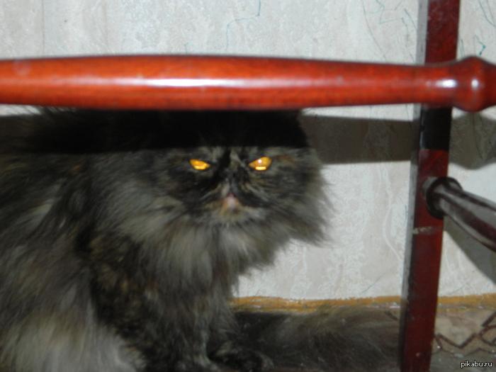 Адская кошка) Знаю кошки уже всех достали, но не могла не выложить эти горящие глаза)