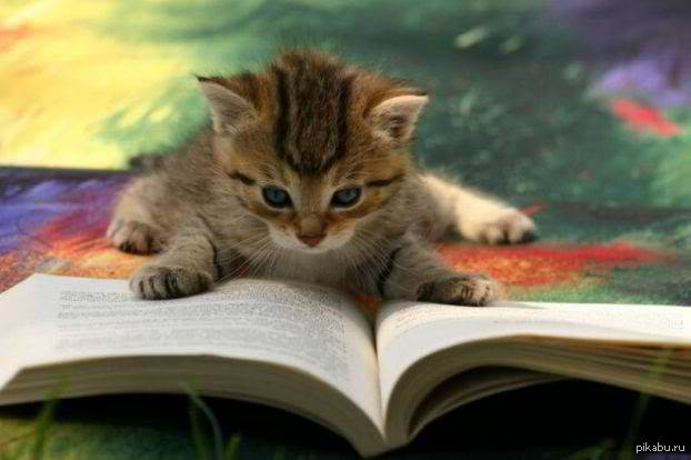 cat training book review