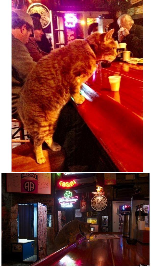 картинка рычит кот в баре последнее время мои
