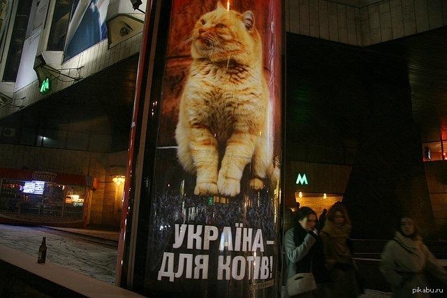 Україна - для котів!