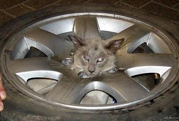 Кошачья сила