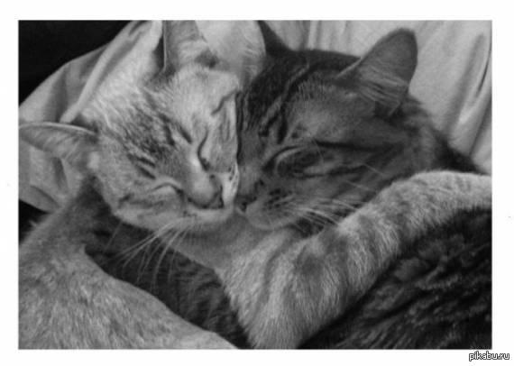 котики про любовь картинки