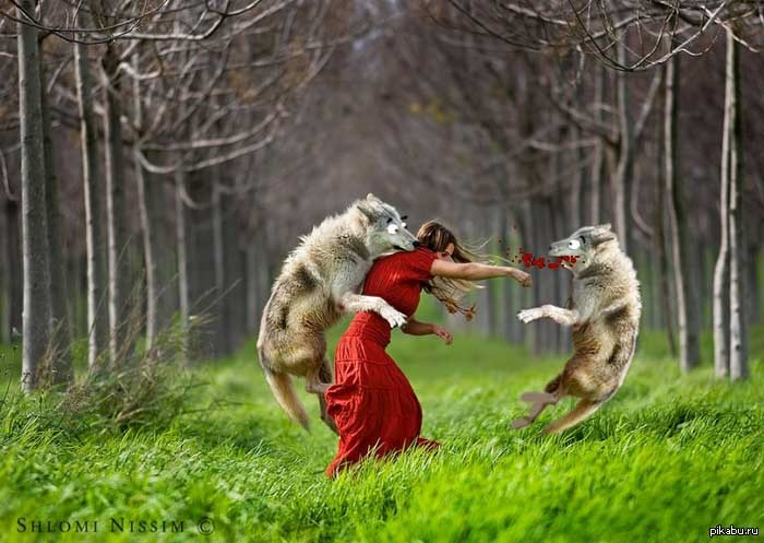 красная шапочка и волк картинки