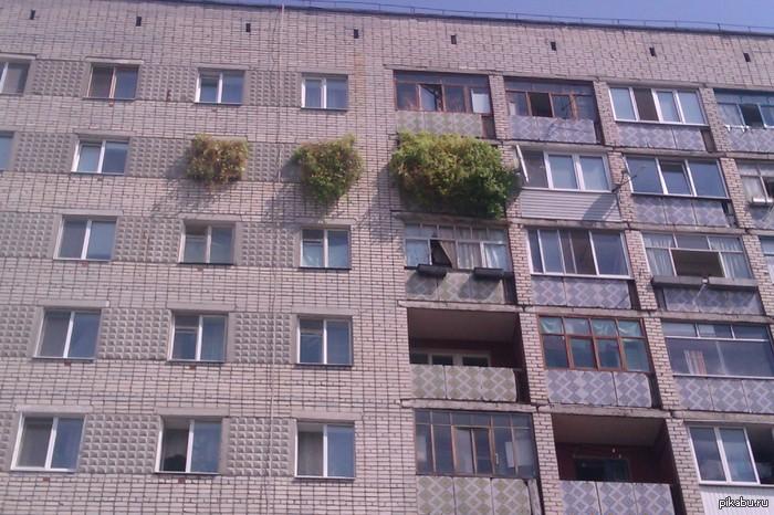 Окна  ботаника ) боюсь  представить  что  внутри квартиры )
