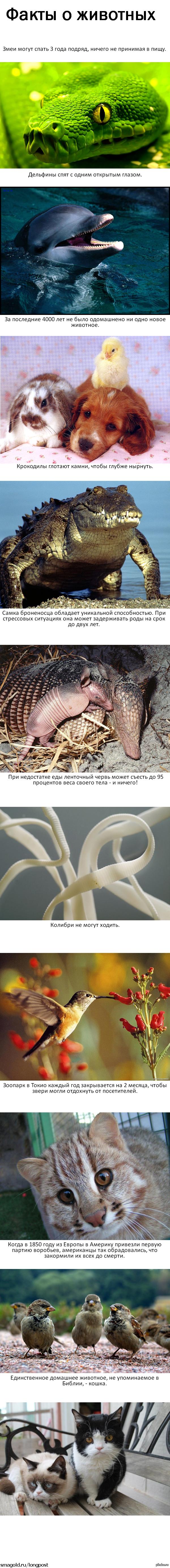 Интересные факты о животных. Длиннопост