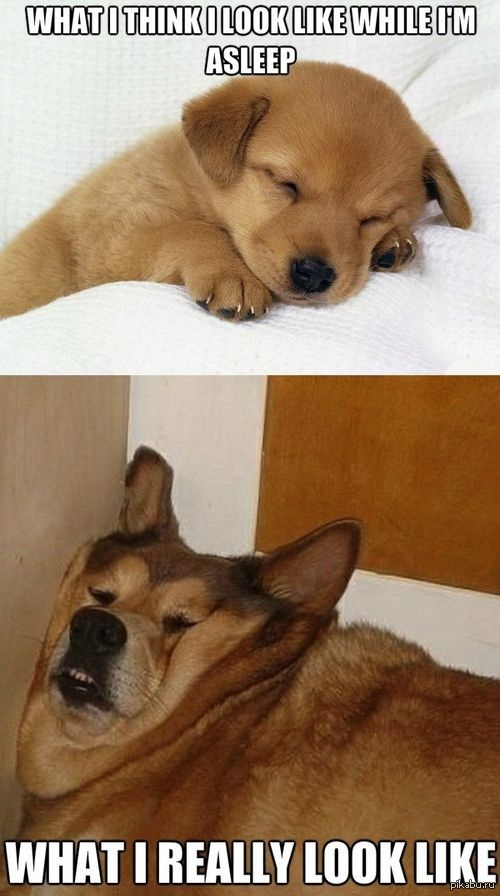 sleepy animals meme - 625×946