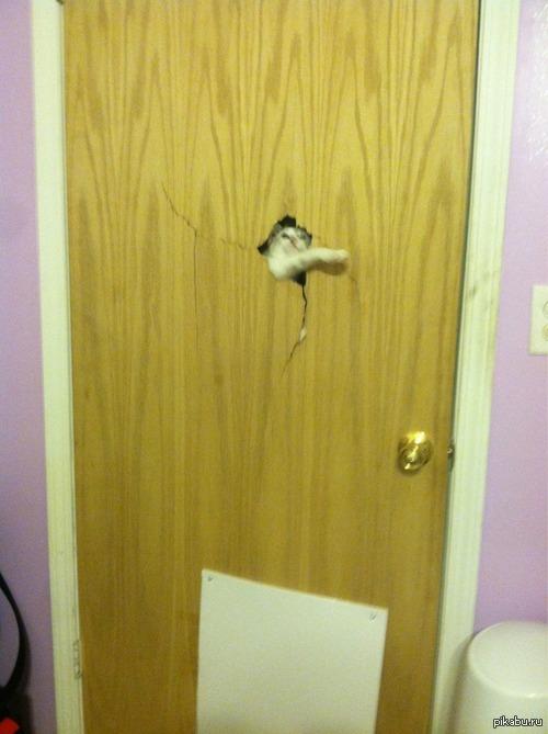 Кот-дверолом Демон во двери)