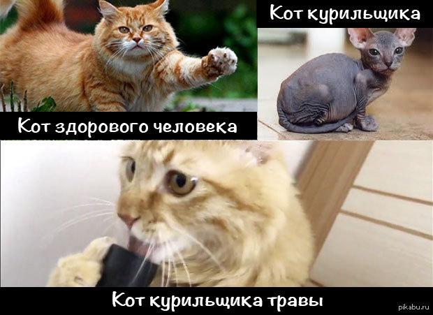 Кот здорового человека