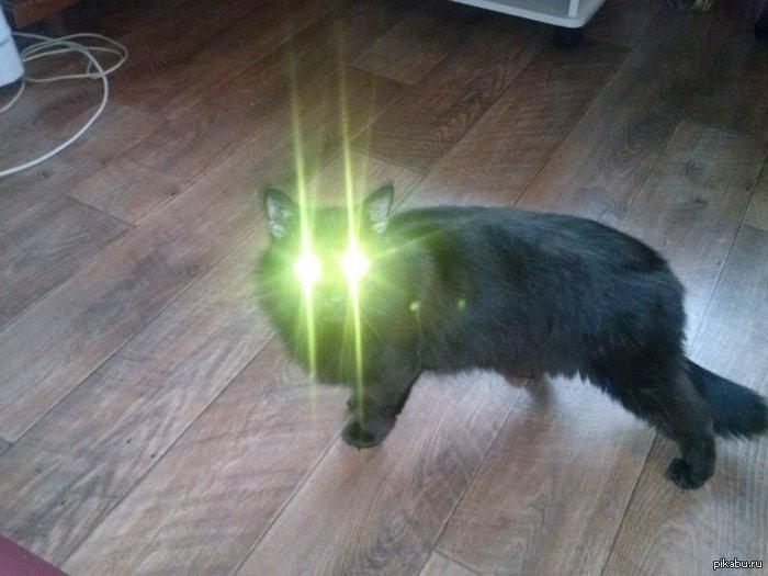 мой кот заменяет мне фонарь