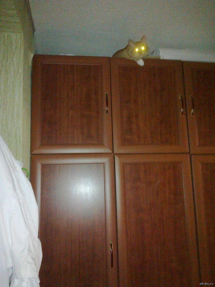 Возвращаюсь домой. Где же кошка? А нету кошки...