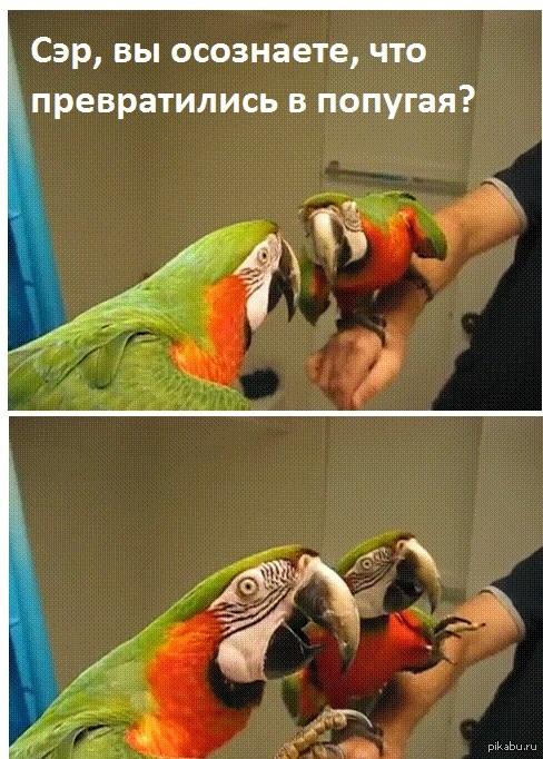 Картинки про попугаев смешные с надписями