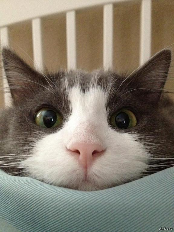 картинки с говорящими котами для тортов пирожных