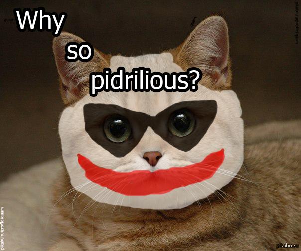 Кот с картинки пидрила
