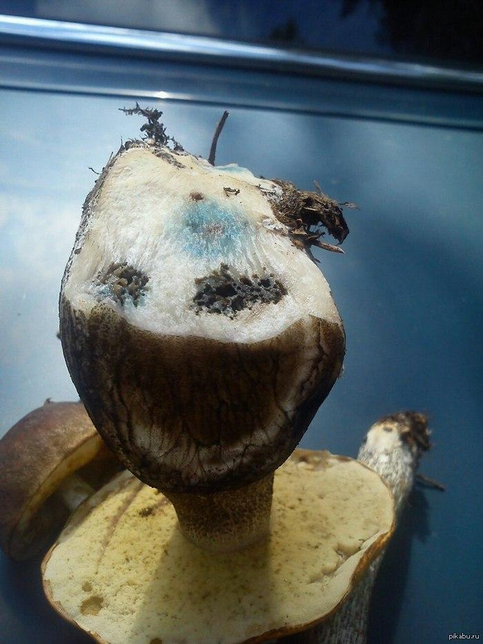 Очень веселый гриб