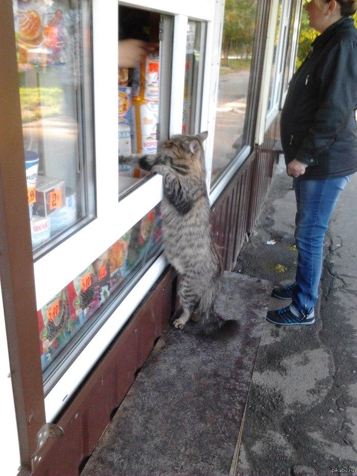 Кот в киоске