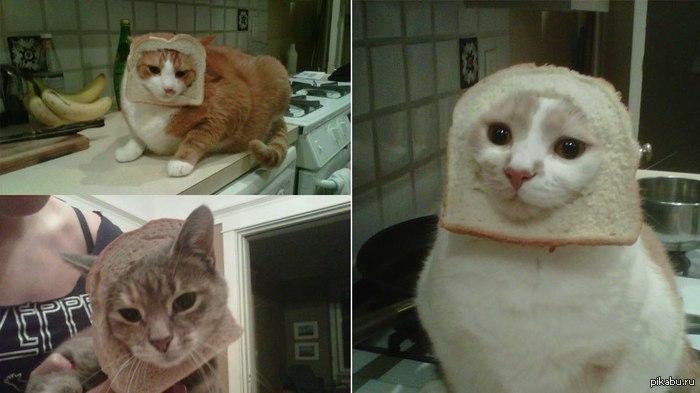 therapy cat training michigan