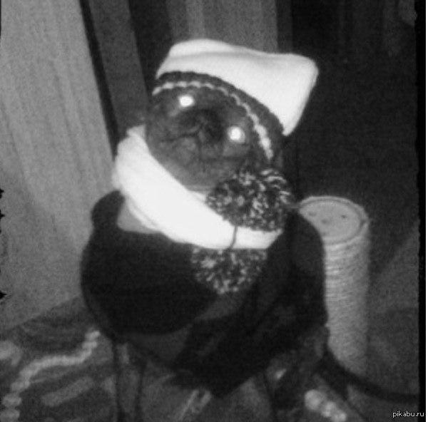 Кажется, мой кот хочет убить меня. Кот сфинкс, и сейчас ему холодно, вот и одеваем его.