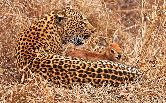 Очередной пример дружбы в дикой природе
